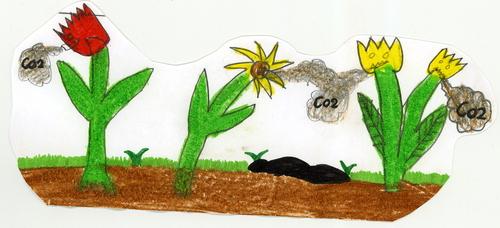 Umweltschule - Grünfutter